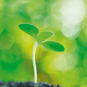 seedling_klein
